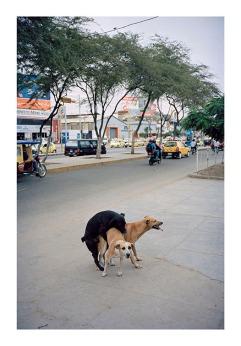 Three Dogs by Luke Clerkin