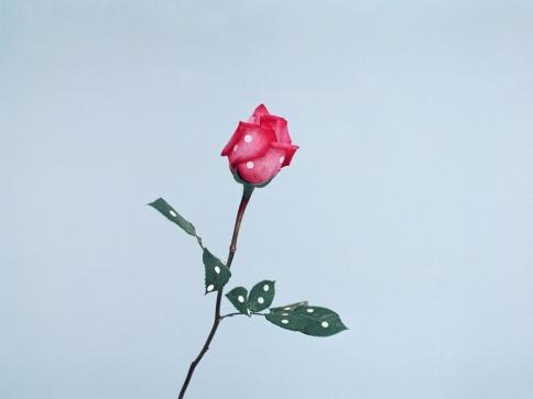 04-Ina_Jang-a_rose-2009