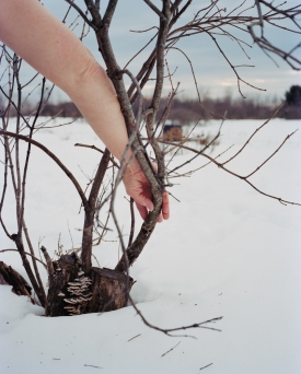 Sarah Pfohl: Lilac in Winter
