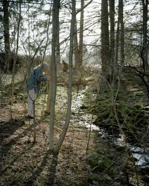 Sarah Pfohl: Forest stream