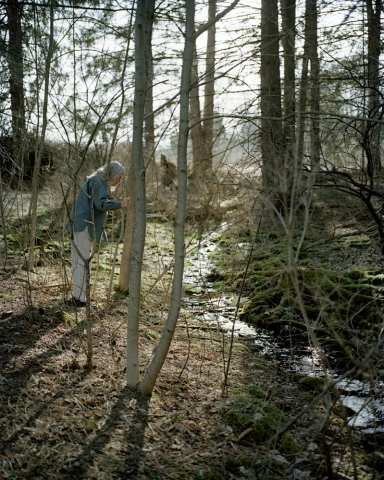 Sarah Pfohl: Forest stream