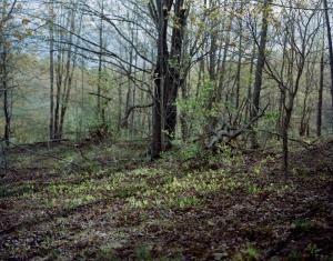 Sarah Pfohl: Spring Landscape