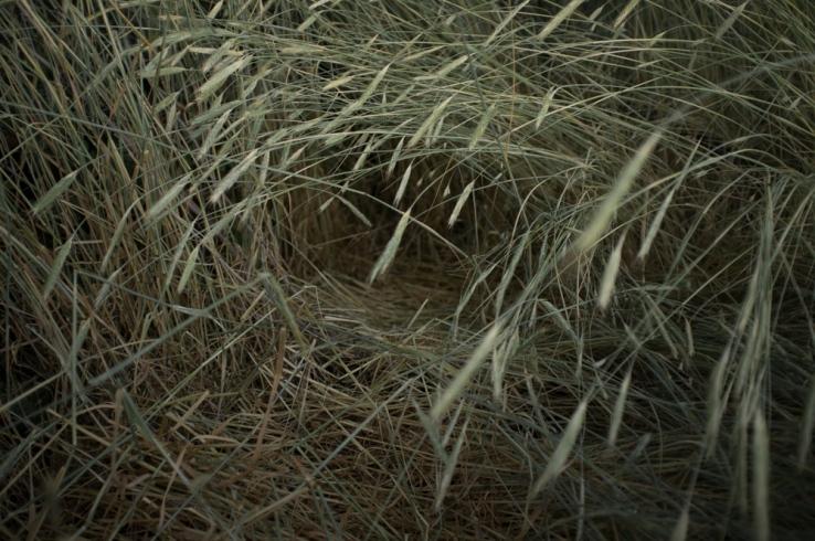 Jeremias Paul: Adam's Hut