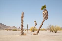 William LeGoullon: Palms